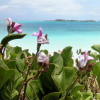 Bermuda Plant Finder Guide Available Online