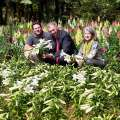 Easter Lilies To Be Sent To The Queen