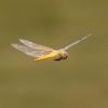 Bermuda Welcomes Thousands Of Dragonflies
