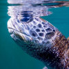 Greenrock On Relocation Plan For Sea Turtles