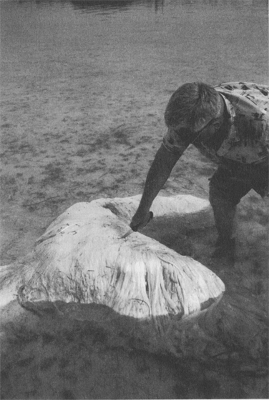 1988: Bermuda Blob