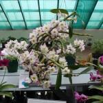 ag show flowers 2010 12