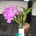 ag show flowers 2010 8