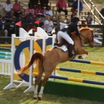 bermuda horse ag 10