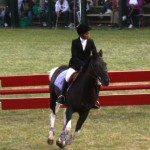 bermuda horse ag 11