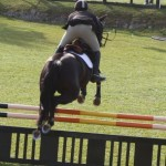 bermuda horse ag 13