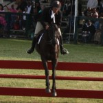 bermuda horse ag 15