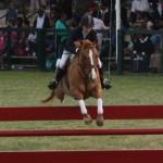 bermuda horse ag 17