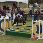 bermuda horse ag 2