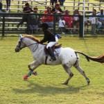 bermuda horse ag 21
