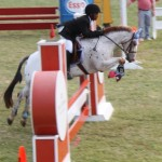 bermuda horse ag 28
