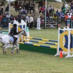bermuda horse ag 29