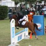 bermuda horse ag 32