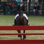 bermuda horse ag 4