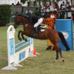 bermuda horse ag 5