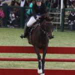 bermuda horse ag 6