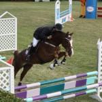 bermuda horse ag 8