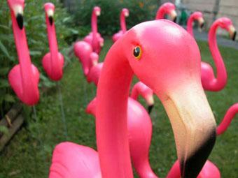 pink_flamingo22009-09-03-1251994248