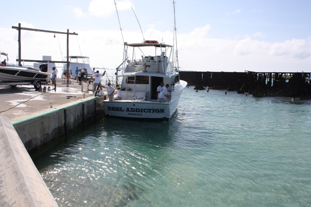 Bermuda anglers club international fishing tournament iltt for Fishing in bermuda