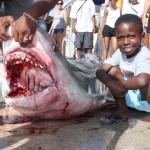 tiger shark july 2010 (7)