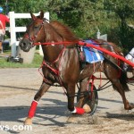 sept 11 2010 harness racing (12)
