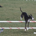 bermuda dog show oct 23 (12)