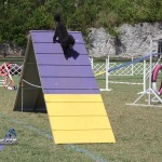 bermuda dog show oct 23 (13)