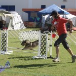 bermuda dog show oct 23 (14)