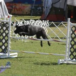 bermuda dog show oct 23