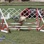 bermuda dog show oct 23 (16)