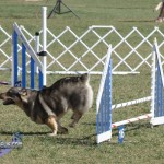 bermuda dog show oct 23 (18)
