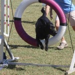 bermuda dog show oct 23 (2)
