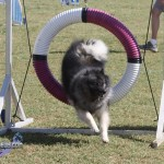bermuda dog show oct 23 (20)