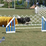 bermuda dog show oct 23 (21)