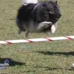 bermuda dog show oct 23 (22)