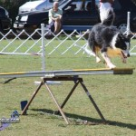 bermuda dog show oct 23 (23)