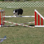 bermuda dog show oct 23 (24)