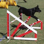bermuda dog show oct 23 (3)