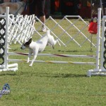 bermuda dog show oct 23 (5)