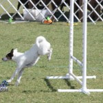 bermuda dog show oct 23 (6)