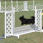 bermuda dog show oct 23 (9)