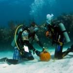 bermuda underwater halloween 2010 (9)