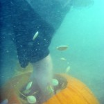 underwater pumpkin carving bios 2010 (1)