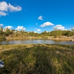 Wetlands Bermuda Feb 1st 2011-1-6