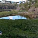 Wetlands Bermuda Feb 1st 2011-1-9