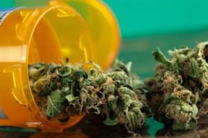 medical weed cannabis