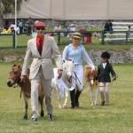 ag show equestrian 2011 bermuda (2)