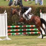 ag show equestrian 2011 bermuda (3)