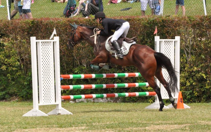 ag-show-equestrian-2011-bermuda-3