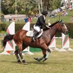 ag show equestrian 2011 bermuda (4)